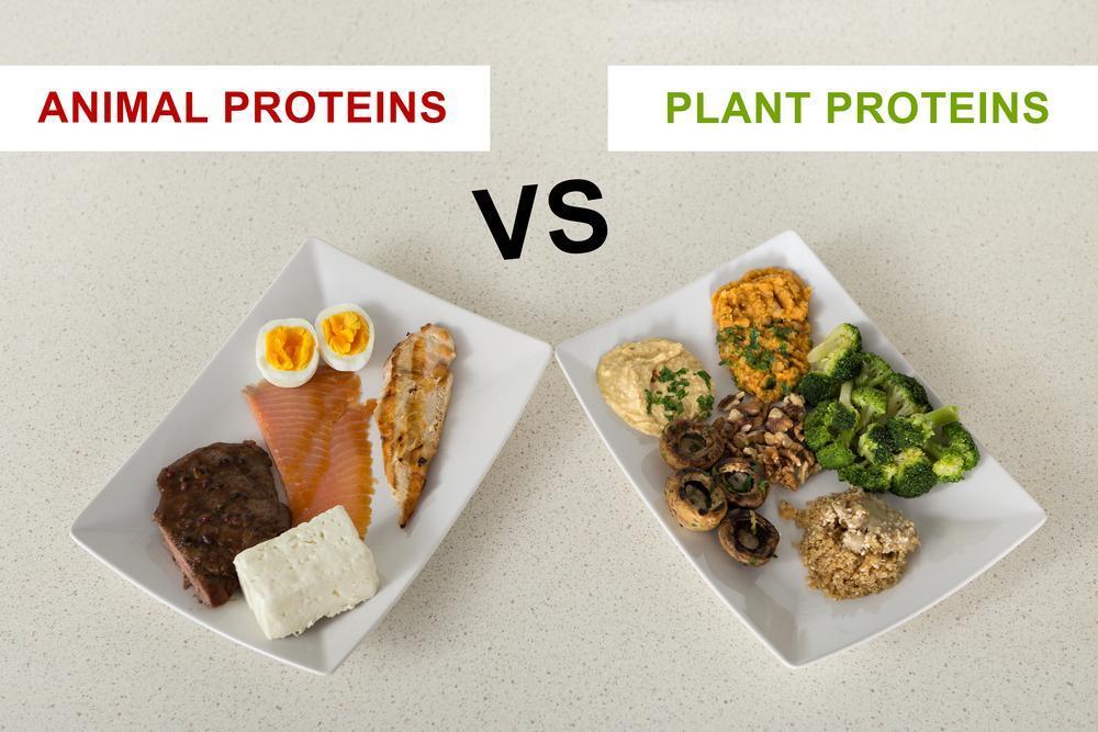 منابع پروتئین گیاهی و حیوانی