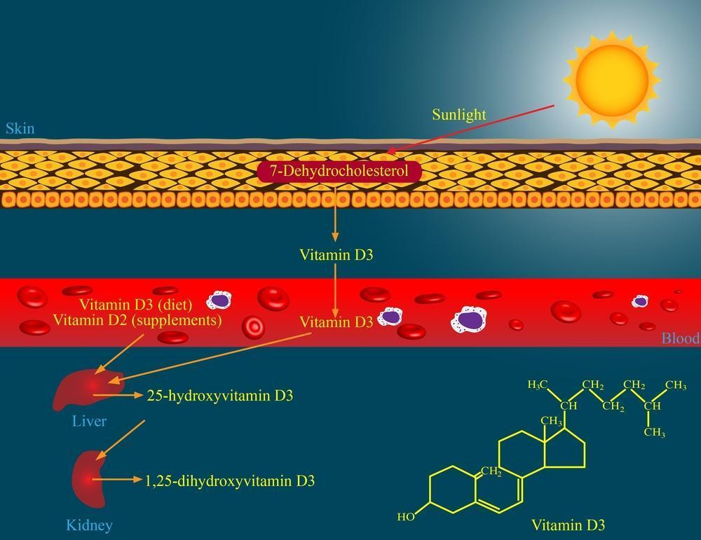 نحوه جذب ویتامین D3 از روی پوست