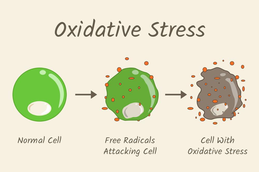 استرس اکسیداتیو