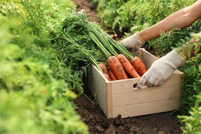 خواص هویج برای سلامتی