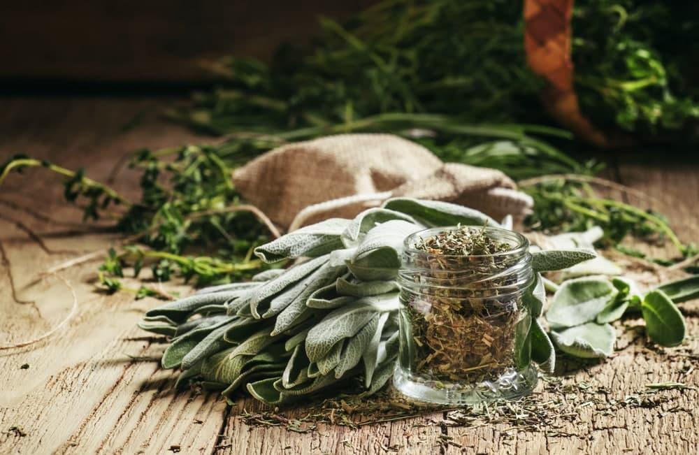 خواص مریم گلی برای سلامت