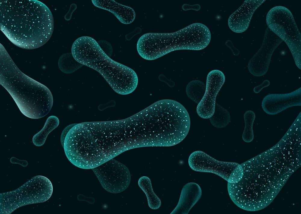 فواید پروبیوتیک برای بدن